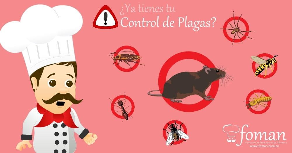 Como hacer un control de plagas sencillo y efectivo for Control de plagas badajoz