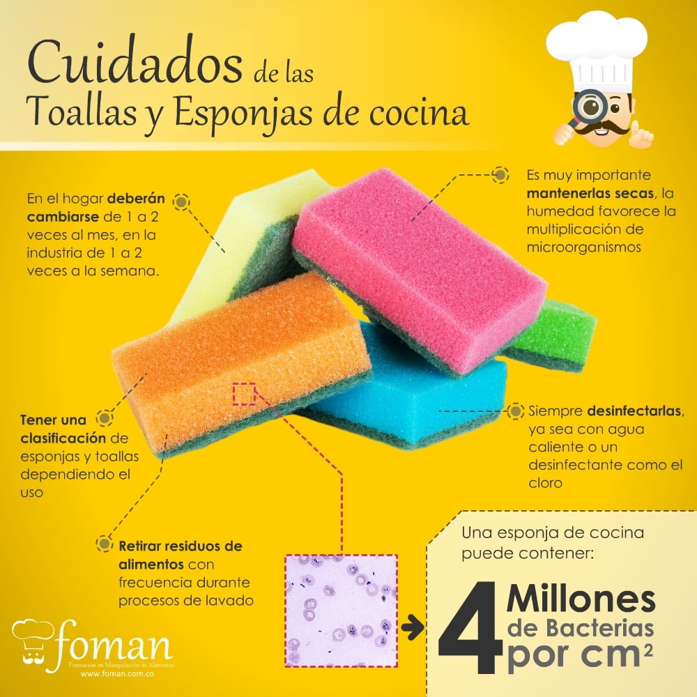 Qu tan durables y limpias son tus esponjas de cocina for La cocina de los alimentos pdf