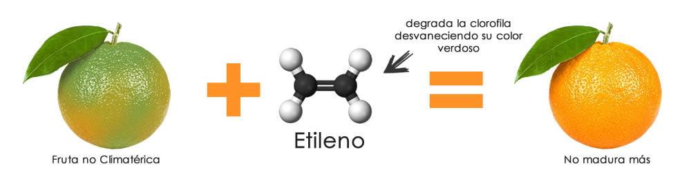Resultado de imagen para etileno en frutas